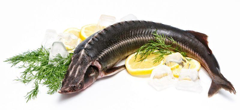 Перевозка рыбы по ЖД